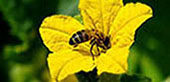 Як уникнути отруєння бджіл